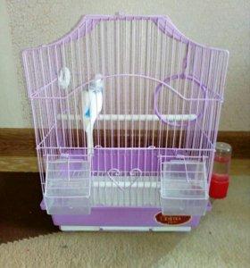 Волнистый попугайчик (девочка)