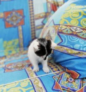 Кошечка ищет своих хозяев