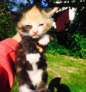 Трехцветные Котята на Счастье