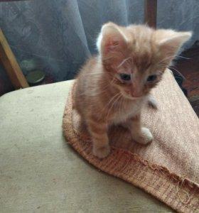 Котик ищет новых хозяев