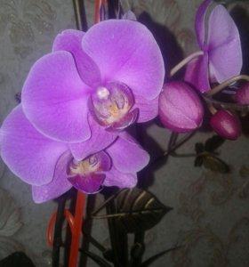 Цветы комнатные растения