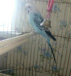 Продаю попугаев