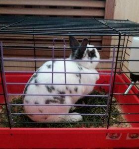 Декоративный кролик с клеткой. СРОЧНО