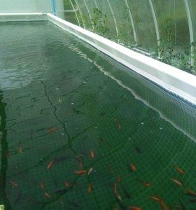 Голубая вода для аквариумов и прудов на 7000 л.