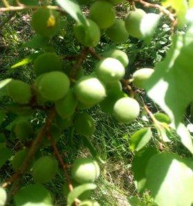 Участок, 8.1 сот., сельхоз (снт или днп)