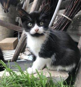 Четыре чёрненьких прекраснейших котёнка