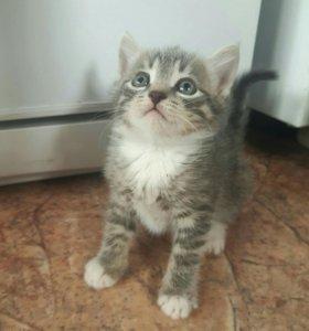 Котята 1.5 месяца