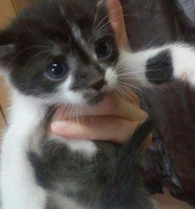 Котята очаровашки