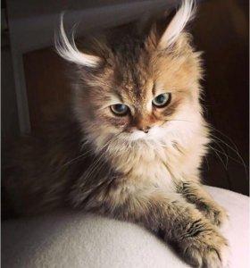 Выгул кошек | выгул кошки