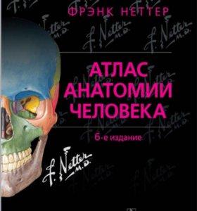 Атлас анатомии человека Неттер Ф.