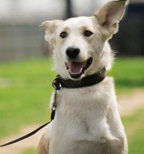 Белый надежный пес Феник
