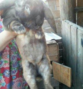 """Кролики """"Французский баран"""""""