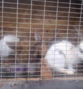 Кролики 🐰