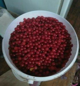 Продам ягоды красной смородины не дорого.