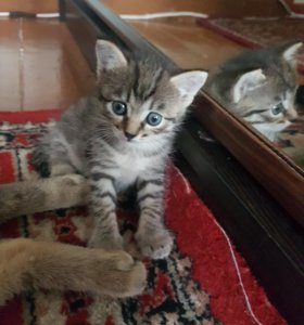 Котеночек