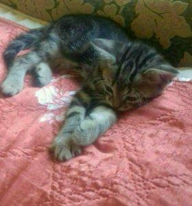Очень милые котята