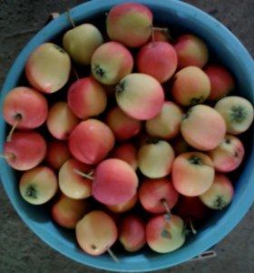 Яблочки Раечка .