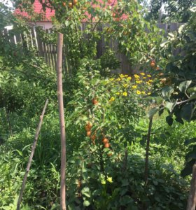 Участок, 14 сот., сельхоз (снт или днп)