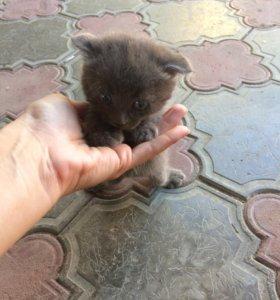 Кот в добрые руки