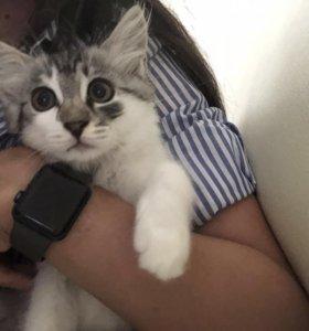 Отдам котят в добрые руки !!!