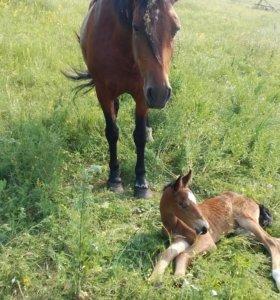 Откликнитесь хозяева лошади с жеребенком!!!!