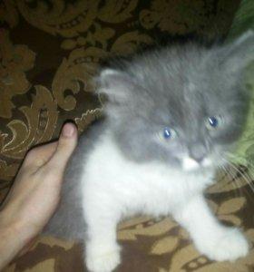 От дам котёнка в добрые руки