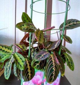 Домашние растение