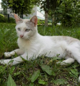 Котик (примерно 10 мес)