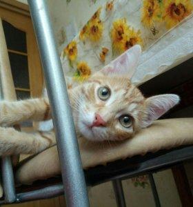 Солнечный котик в дар, 4мес