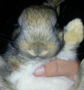 Мясо кролика