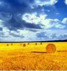 Участок, 16000 сот., сельхоз (снт или днп)