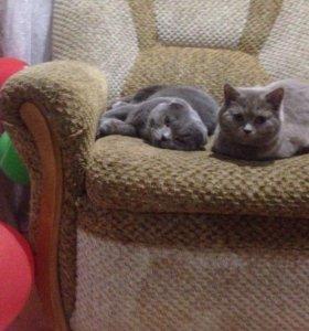 Котятки ищут своих хозяев