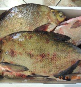 Рыба свежая окунь,лещ,карась