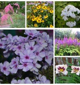 Цветочки садовые