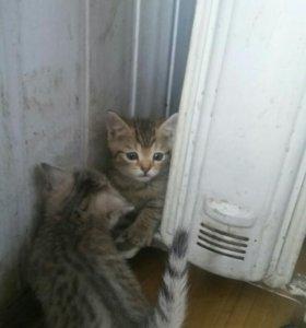 Котята 1 рубль