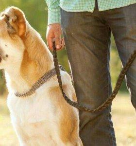 Выгулю ваших собак (100рублей 1час) звоните с 6до9