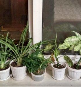 Разные комнатные растения, цветы