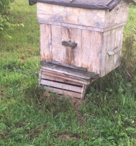 Улий с пчёлами