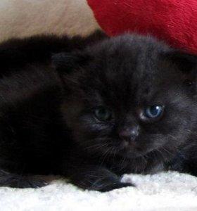 Черные и мраморные котята