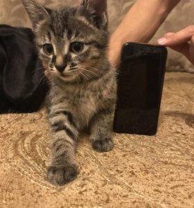 Три кота в хорошие руки
