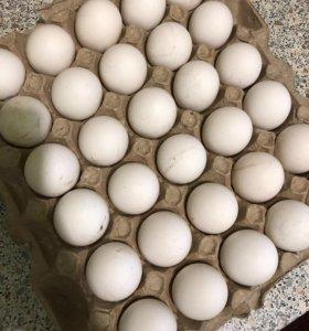 Яйцо свежее