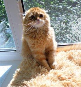 Котята питомника KetMari