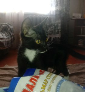 Славный котенок ищет себе новую семью !