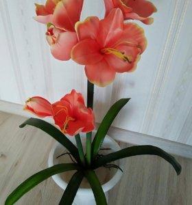 Новые Цветы разные