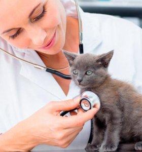 Ветеринарный врач, ассистент,  администратор
