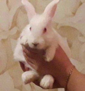 Крольчишка шалунишка