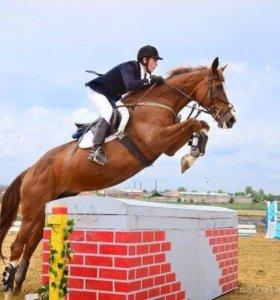 Верховая езда/ конный спорт