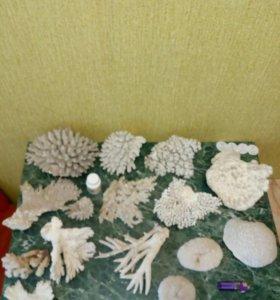 Морские аксессуары для аквариума