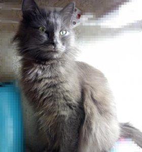 Кошка вот вот родит . Кому котёнка (бесплатно)???