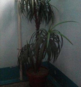 Цветок искусственный пальма
